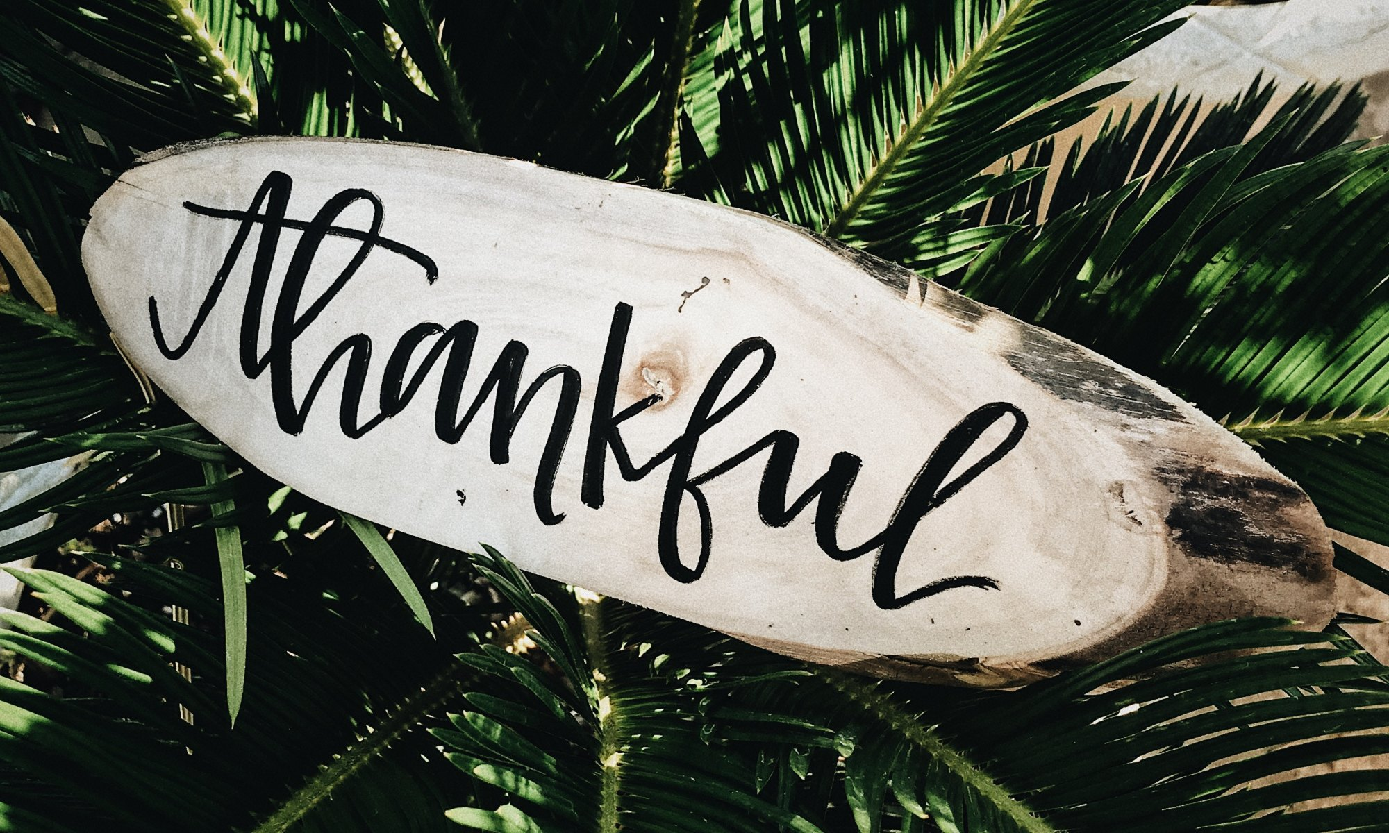 "A wooden sign on a palm tree stating ""thankful"""