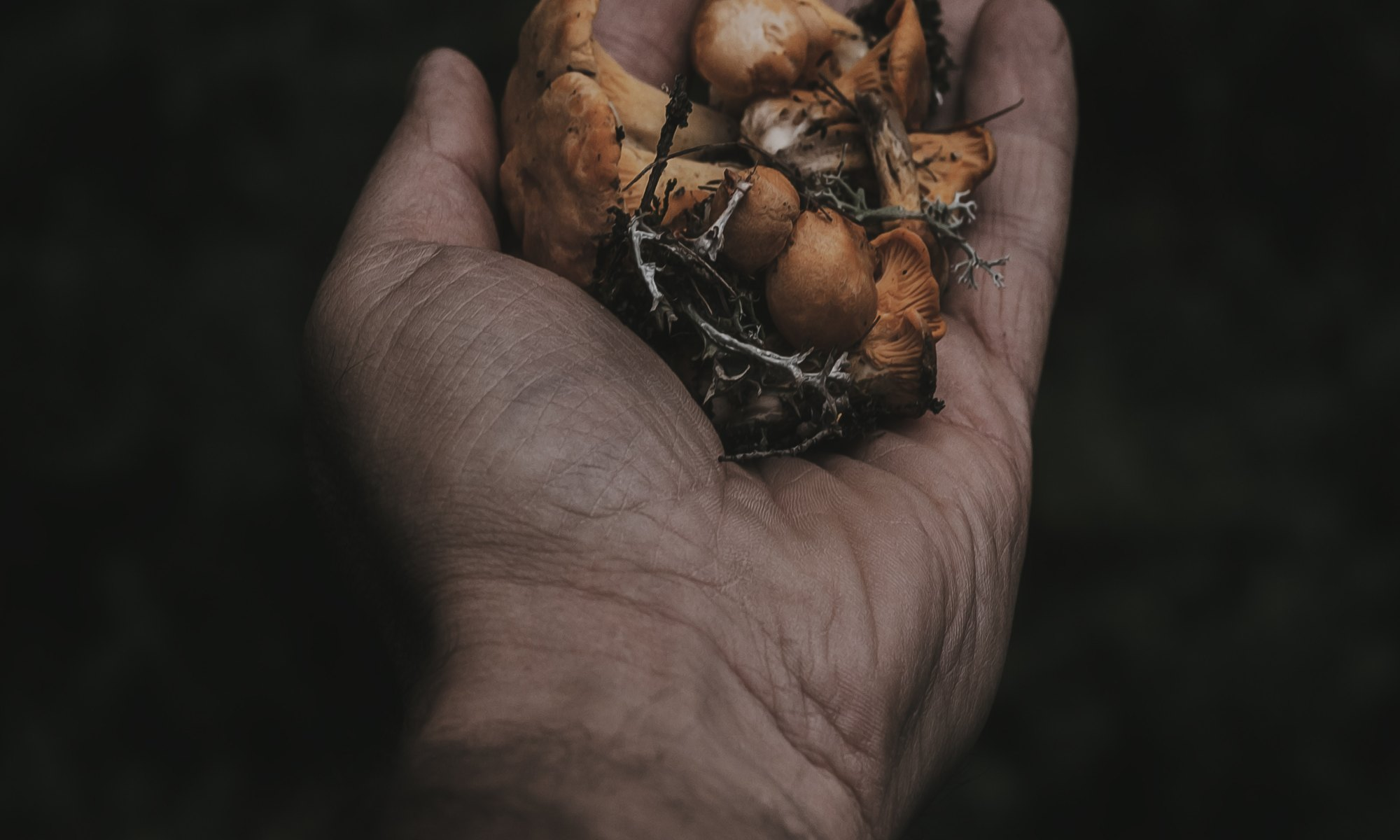A man's hand holding magic mushrooms