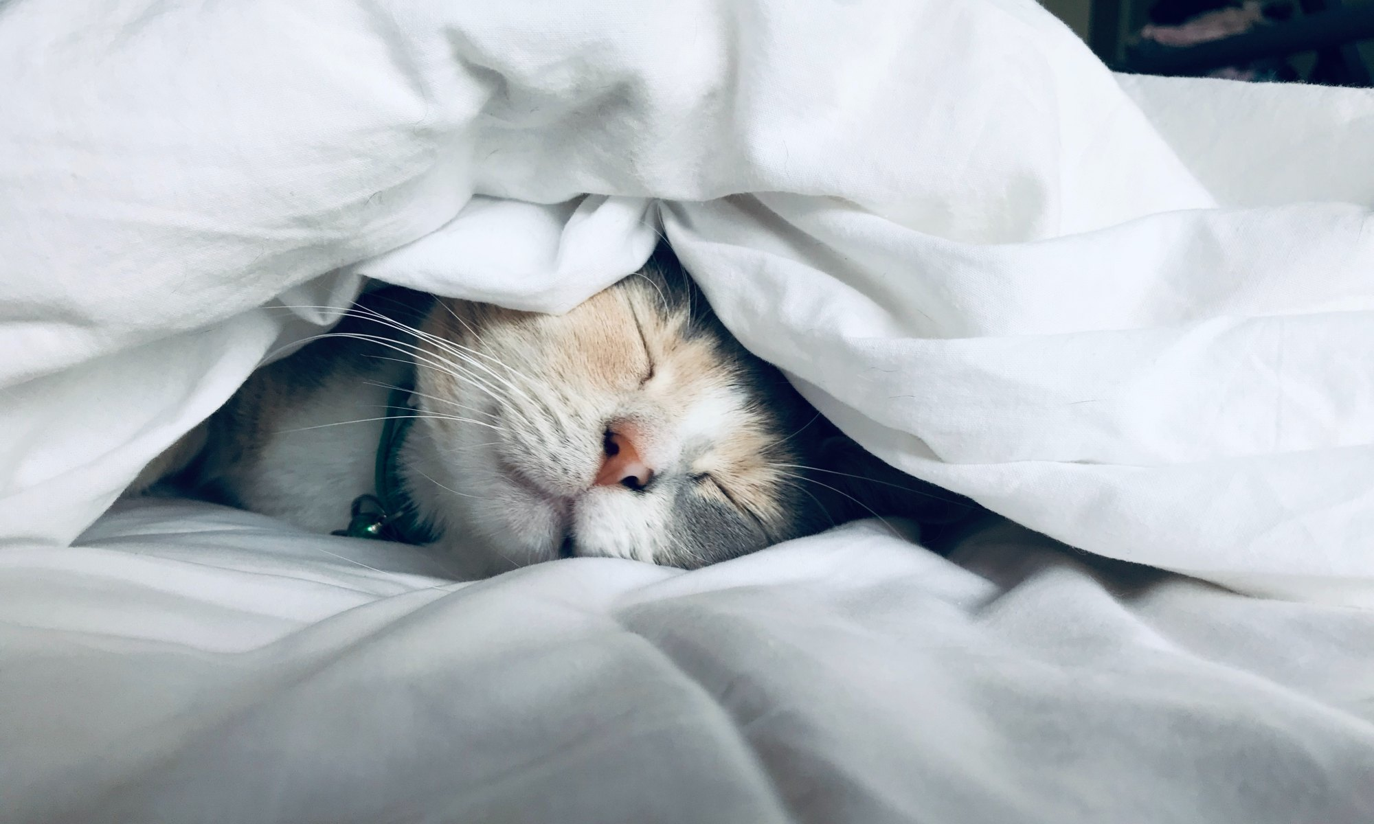 The sleep hygiene of a cat sleeping under a white comforter