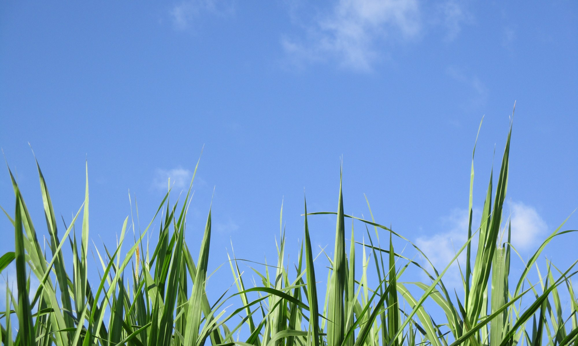 Viewing the blue sky during daytime from grass level