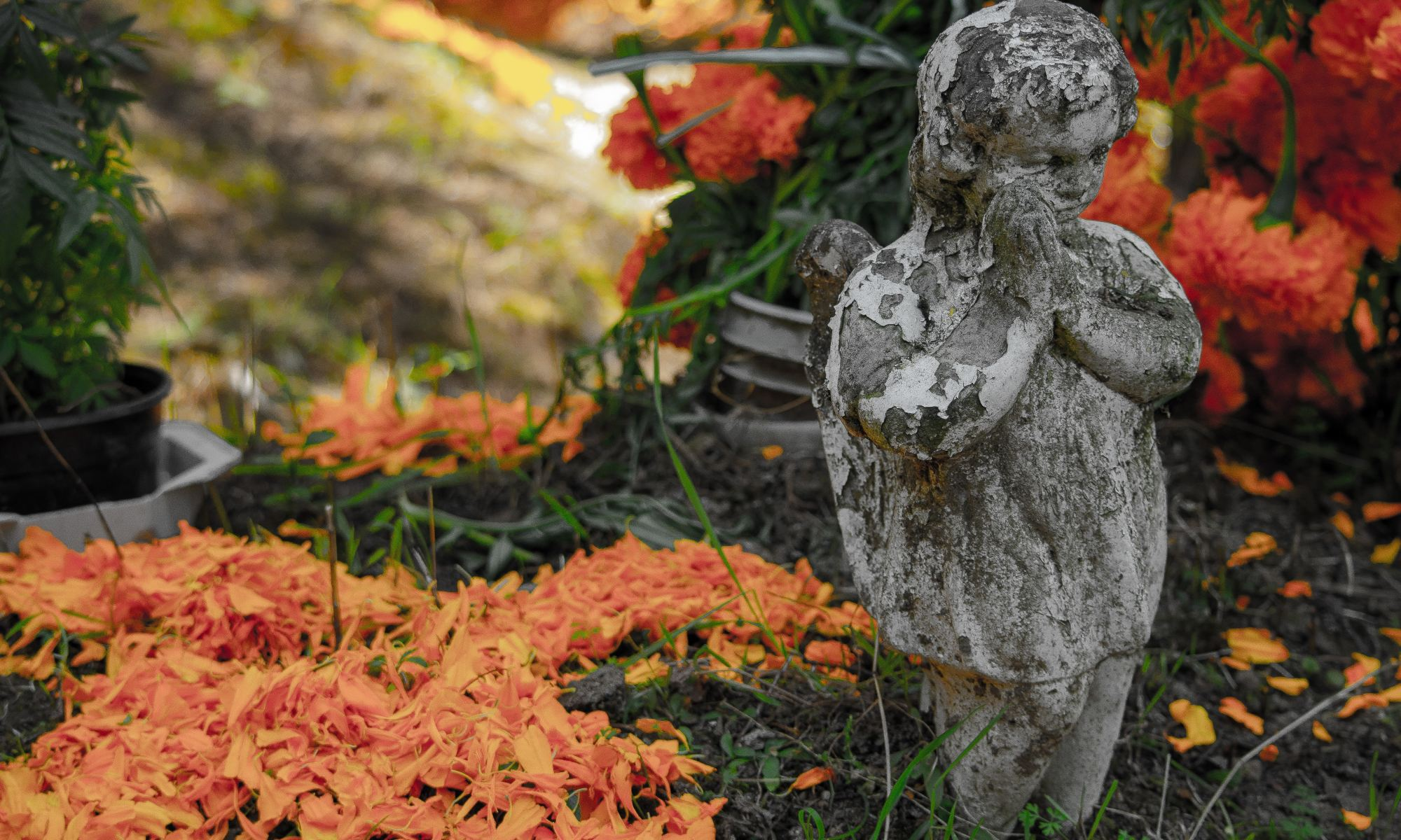 Praying angel statue next to orange flowers outdoors