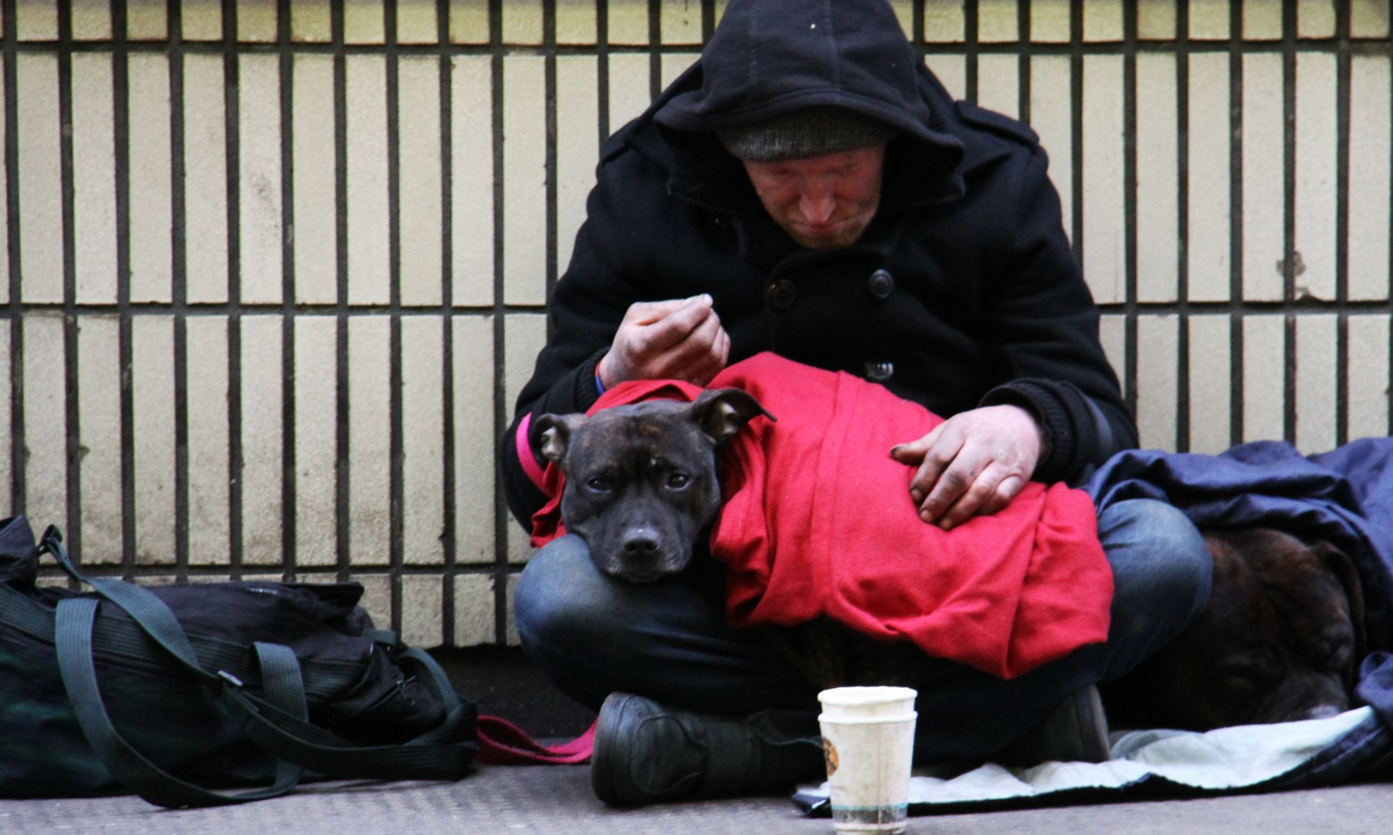 Dog sitting on homeless person's lap