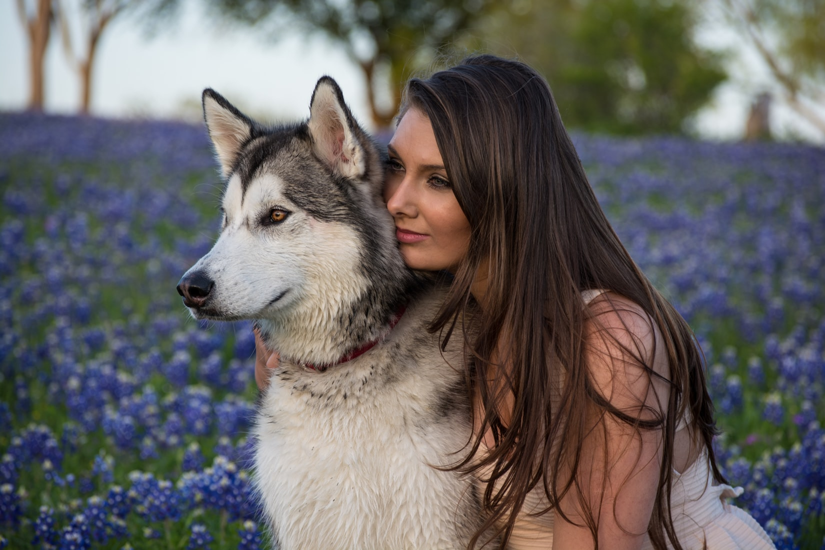 Young brunette woman hugging Siberian Husky near bed of purple flowers outdoors