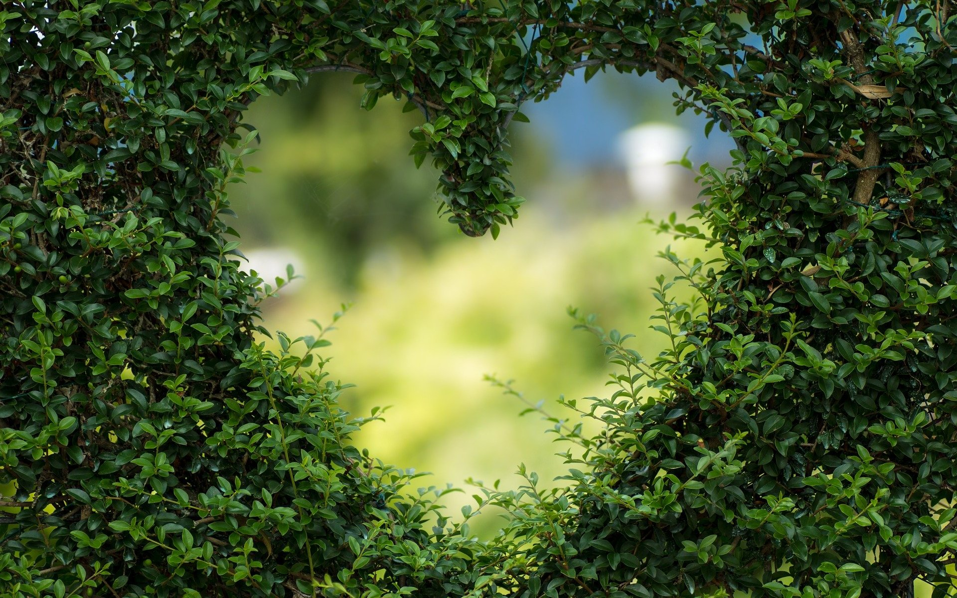 Heart sign through green bush outside