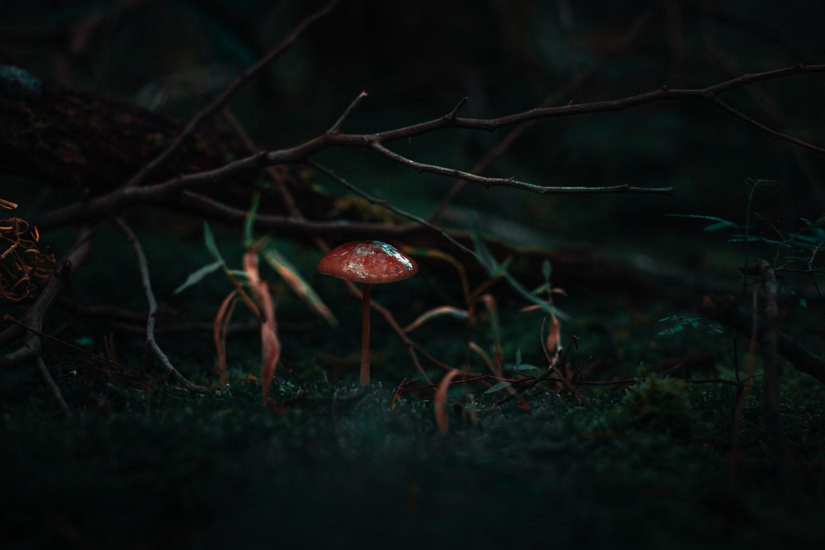 Red mushroom beside grass and sticks