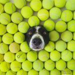 eBay tennis balls advertisement